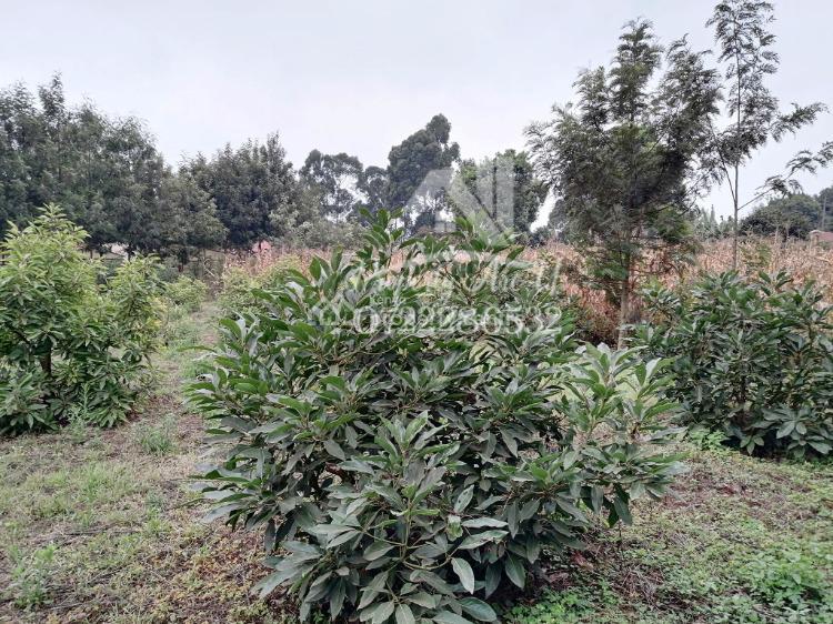 Prime ¼ Acre Plot, Kikuyu, Kikuyu, Kiambu, Residential Land for Sale