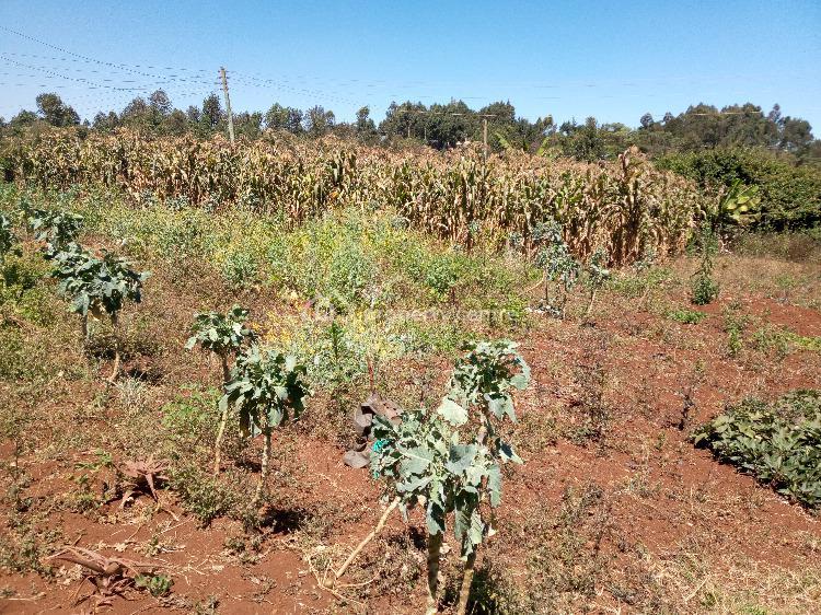 1/4 Acre Plot in Serene Location, Kikuyu Ondiri Road, Kikuyu, Kiambu, Land for Sale