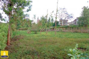 0.5 Acre Residential Plot, Mushroom Road, Ruiru, Kiambu, Residential Land for Sale