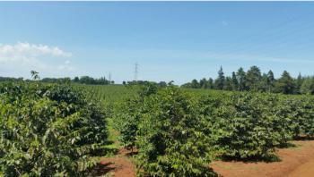 Plot of Land, Igembe East, Meru, Land for Sale