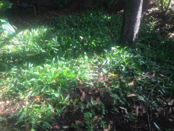 0.67 Acres Vacant Land, Parklands, Nairobi, Mixed-use Land for Sale