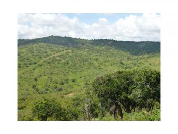 Stunning 20 Acre Plot, in Timau Near Borana Conservancy and Ngare Ndare Forest Timau, Timau, Meru, Land for Sale