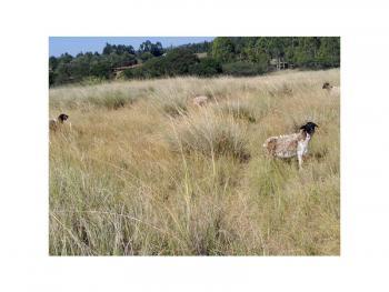 15.3 Acre Farm Ol Kalou By Gilgil, on The Ol Kalou - Njabini Road, Gilgil, Nakuru, Land for Sale