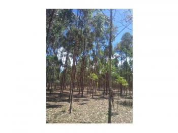 Lovely 8.5 Acre Tree Farm, Ol Kalou, Gilgil, Nakuru, Land for Sale