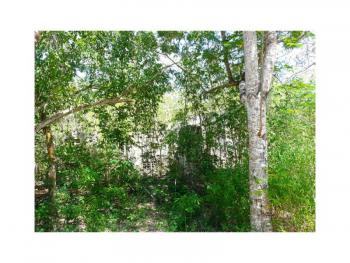 22 Acre Beachfront Plot, in Tiwi Near Traveller Beach Hotel, Only 2km Off Ukunda Road, Tiwi, Kwale, Land for Sale