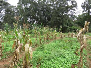 1.5 Acres Residential Vacant Land, Muthaiga North, Muthaiga, Nairobi, Residential Land for Sale