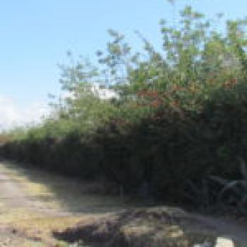 Prime 5 Acres of Land, Kangundo Central, Machakos, Land for Sale