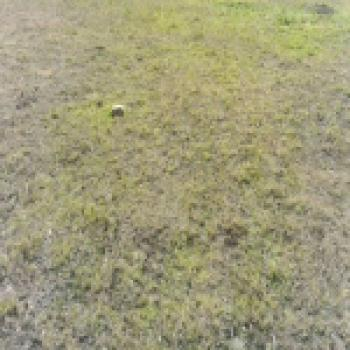 0.7 Acre Commercial Plot, Kangundo Road, Kayole, Nairobi, Commercial Land for Sale