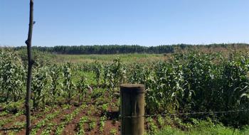 Eldoret Land, Kitale, Trans Nzoia, Land for Sale