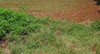 Thome Land, Thome, Thika, Kiambu, Land for Sale