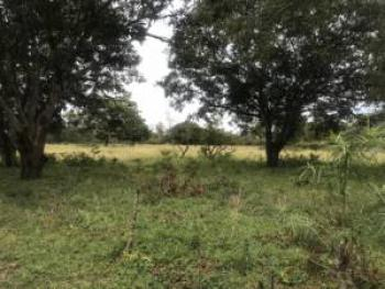 Agricultural Land, Gede, Mijomboni, Malindi Town, Kilifi, Land for Sale