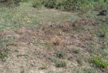 1/4 Acre Plot, London, Nakuru, Land for Sale