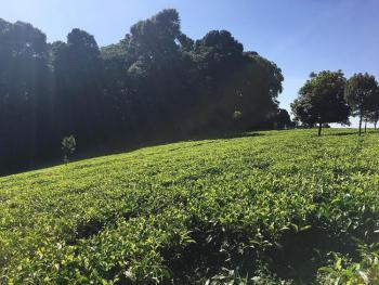 Tigoni Riara Ridges 1/2 Acres Prime Lands, Tigoni Riara Ridges Road, Ngecha Tigoni, Kiambu, Mixed-use Land for Sale